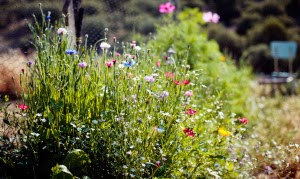 Cuidar i curar amb plantes