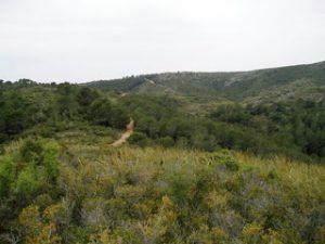Passejada per la Serra Perenxisa. Diumenge 26 de febrer